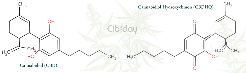 Cannabidiol Hydroxychinon