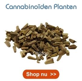Cannabinoiden Planten Kweken