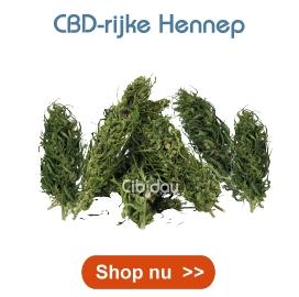 CBD Hennep Cibiday