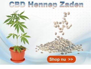 CBD Hennep Zaden Cibiday