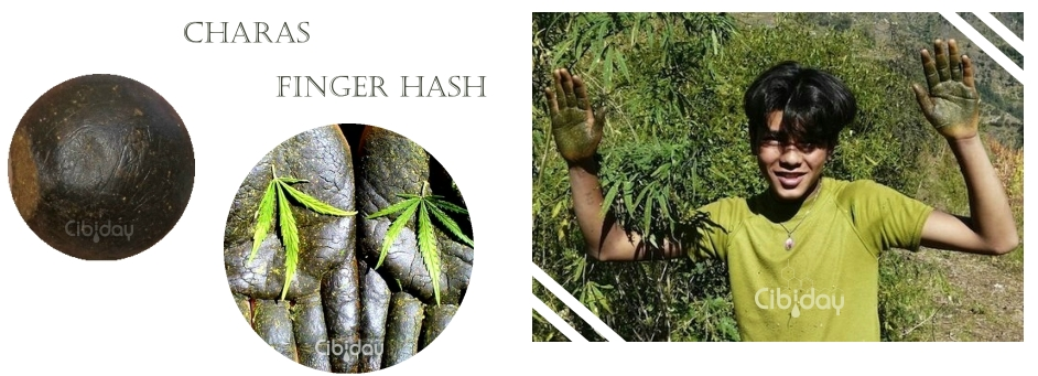 Charas Finger Hash