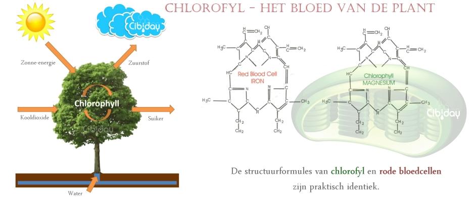 Chlorofyl Bloed van Plant