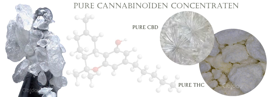 Pure Cannabinoiden Concentraten